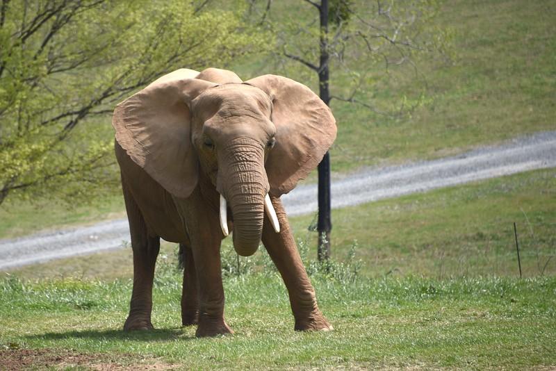 Elephant Alert!
