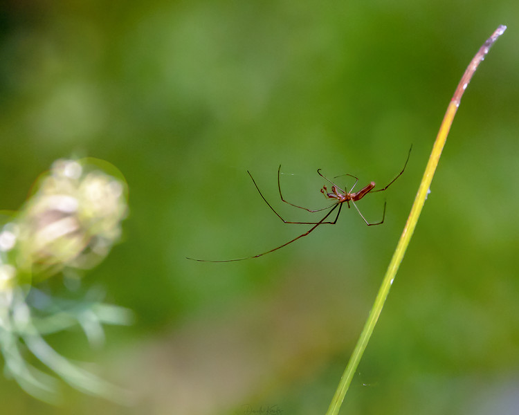 Spider balances delicately on a thread