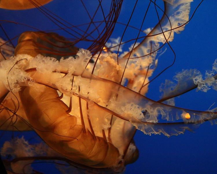 San Francisco June 2010.  California Academy of Sciences, Golden Gate Park. Steinhart Aquarium.