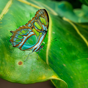 See Through Wings