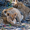 The Animals of the Southern African Savannah