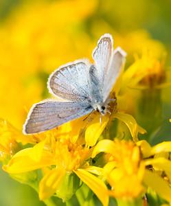 butterflyleftv
