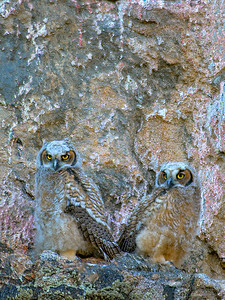 owl22b-1CC
