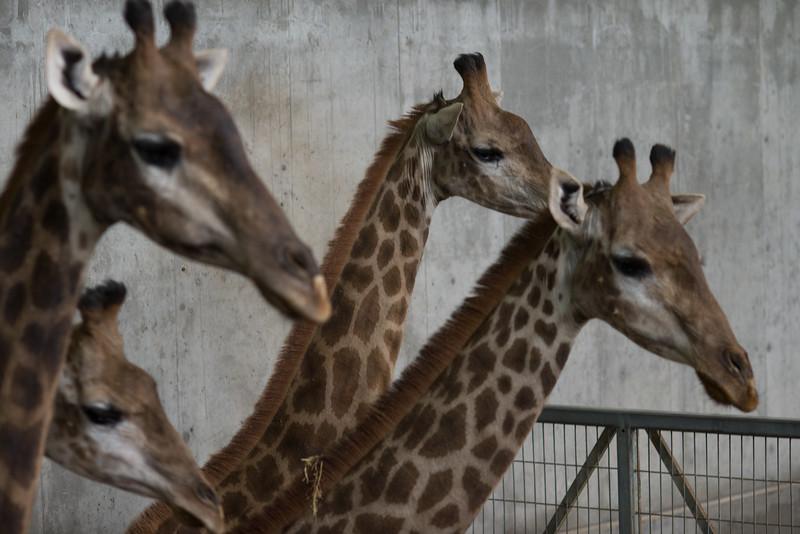 Biblical Zoo Jerusalem