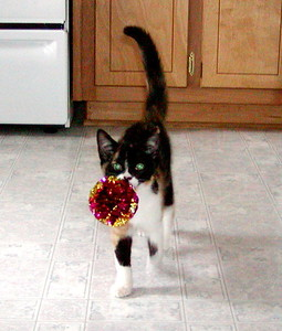 NoShoot loved to play fetch.  I think she thinks she's a dog!