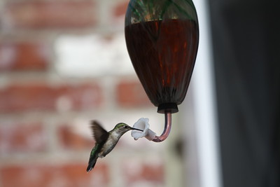 06-13-15 Hummingbird