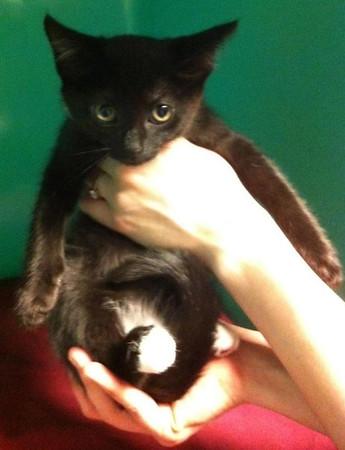 10-31-13 New Kittens