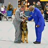 German Shepherd Nationals at Purina Farms - 10/11/14