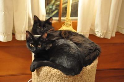 12-06-13 Cats