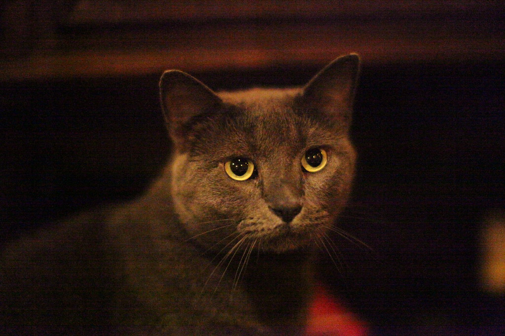 IMAGE: https://photos.smugmug.com/Animals/1310-25-30-PaulaMurr-cats/i-3mfSNkS/0/XL/IMG_6991-XL.jpg