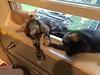 Sprawled in the window