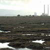 Brent Geese with Poolbeg towers in the background.