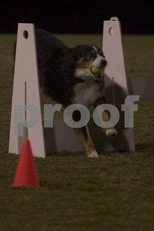 2004_10_1 Flyball at UCSB