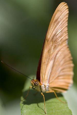 2005_5_14 SB Nat Hist M. Butterflies Alive!