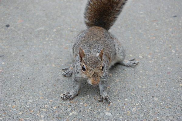 2007 - Street Squirrel