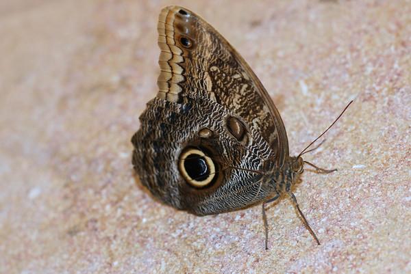 2008 Smithsonian butterflies