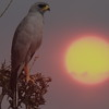 Adler in Sunset Tanzania 2008 (1514)
