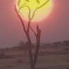 Geier Sunset Tall Tanzania 2008 (1520)