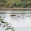 Selous-Rufiji-River_0084