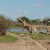 Giraffen Show Selous NatlPark (014)