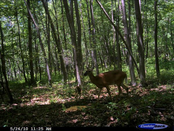 2010 club deer pictures