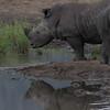 Madikwe_2010_1643