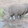 Madikwe_2010_1635