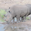 Madikwe_2010_1636