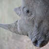 Madikwe_2010_1625