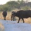 Madikwe_2010_1663