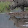 Madikwe_2010_1641