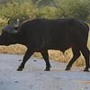 Madikwe_2010_1665