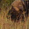 Madikwe_2010_1659