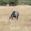 Madikwe_2010_1676