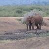 Madikwe_2010_1632