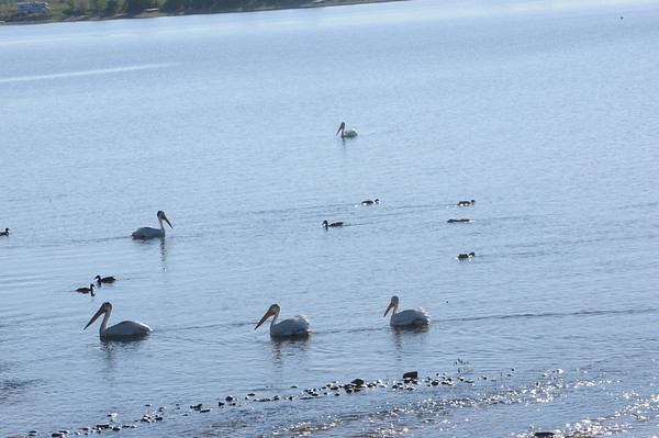 2011 - Baseline Birds