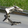 a hood ornament on a parked car