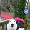 Do these antlers make me look fat?