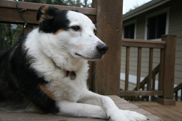 2012 December - Bob The Dog