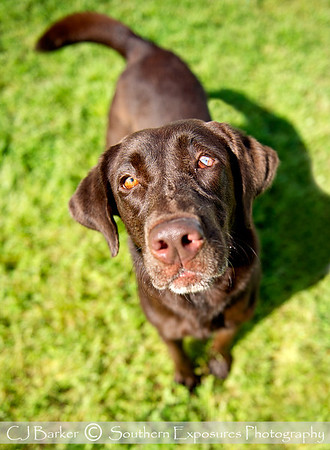 2012 Forgotten Pet Advocates
