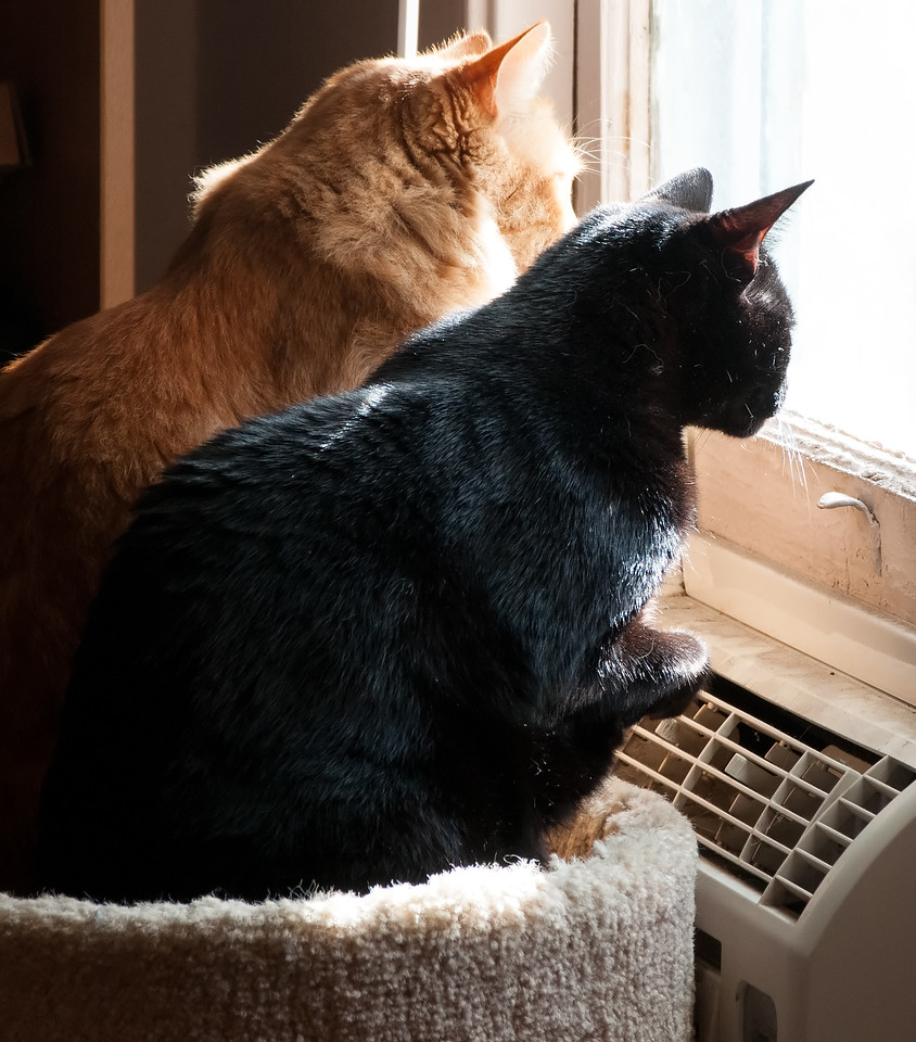 Watching the world go by.