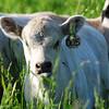A 005<br /> 2013<br /> Sold to a farm near Lodi 2013