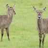 WaterBoks_Arusha_National-Park_080420130005