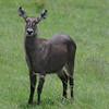 WaterBoks_Arusha_National-Park_080420130003