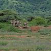 Zebras_Lake_ Manyara_National-Park_10042013_013