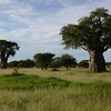 Trees_Tarangire_National-Park_000000000004