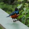 small-Bird_Tarangire_National-Park_09042013_001