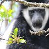 WaterBock_Arusha_National-Park_080420130003