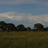 Trees_Tarangire_National-Park_000000000002