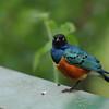 small-Bird_Tarangire_National-Park_09042013_003